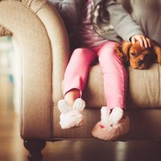 Porządek i zwierzak w domu – czy to możliwe