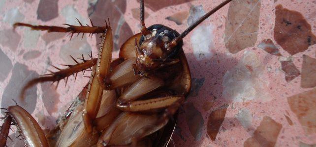 Jak szybko i skutecznie pozbyć się robaków z domu?